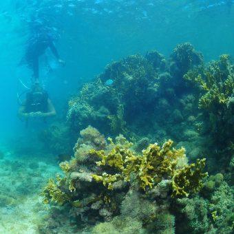 Mergulo nas piscinas naturais de Maragogi