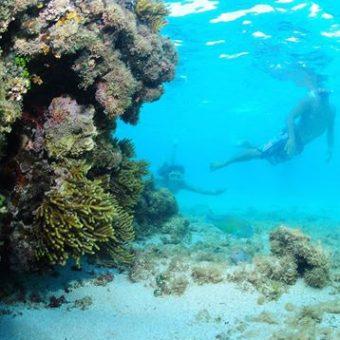 Coral em Maragogi
