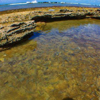 Aquário natural com corais de pedras